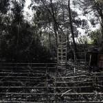Το θεατρο της Ρεματιας καηκε, το αλσος της Νεας Φιλαδελφειας θα κοπει