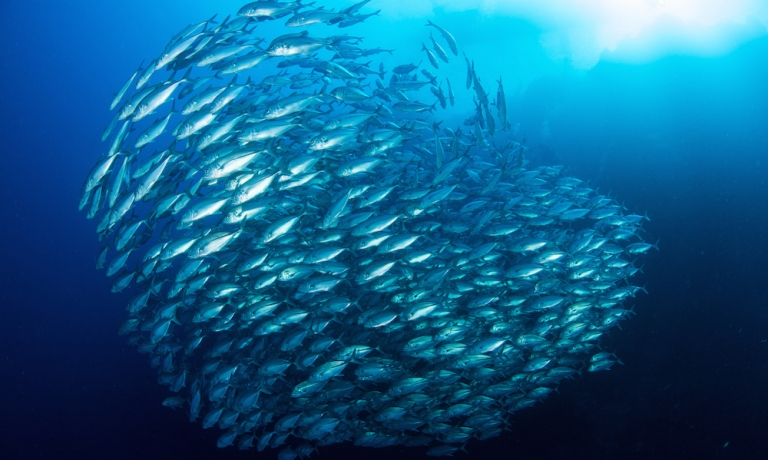 Save The Oceans, Feed The World_2